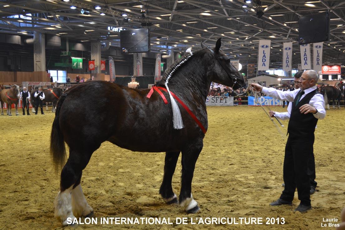 Cheval breton syndicat des eleveurs du cheval breton for Photo du salon de l agriculture