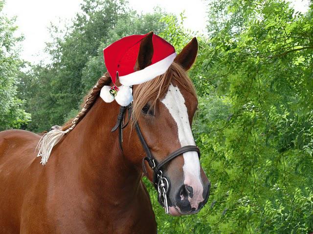 image cheval de noel
