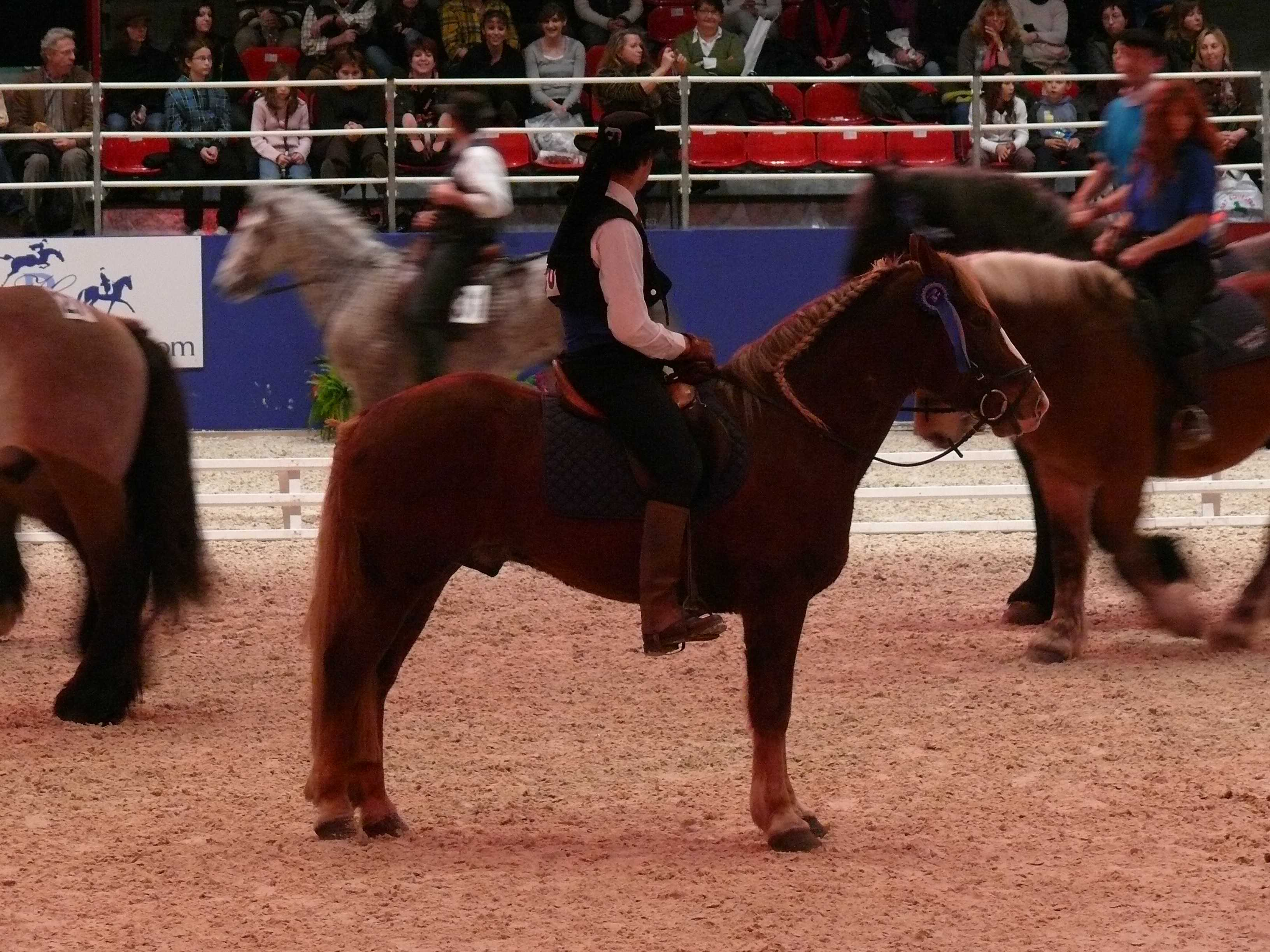 Cheval breton syndicat des eleveurs du cheval breton for Place salon du cheval