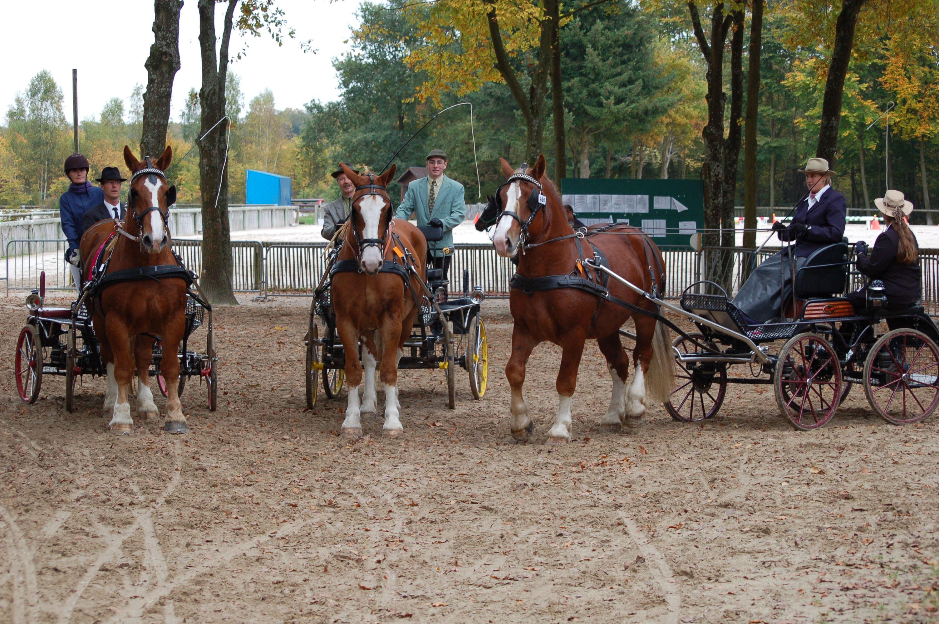 Les chevaux elite en c. libre 2ème année